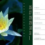 PlantsCalendarBook6