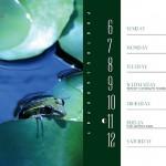PlantsCalendarBook9